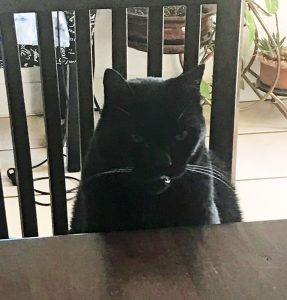 black-cat-table-angry