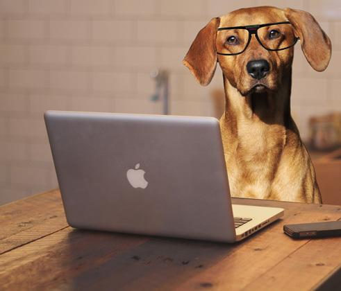 dog-glasses
